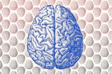 20150218171512-brain