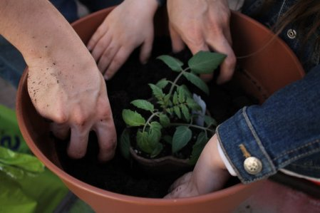 Gardening_HandsJPG