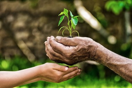 Life-Hands-Gardening-800